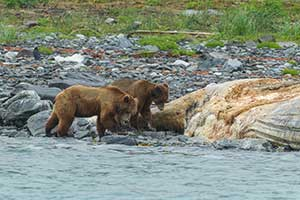 Bears Along the Shore