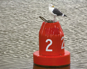 Gull on Buoy
